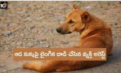 Man Rapes Female Dog
