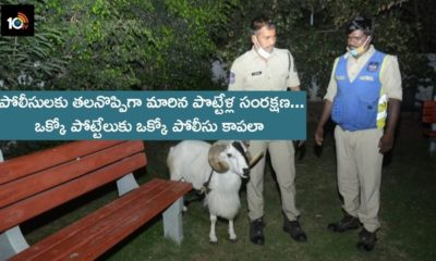 Police Not Controlled 2 Sheeps