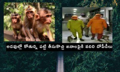 Robbing People By Using Monkeys (1)