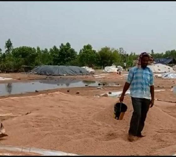Windy Rain In Bhadradri Windy Rains In Bhadradri District Huge Damage To Farmers