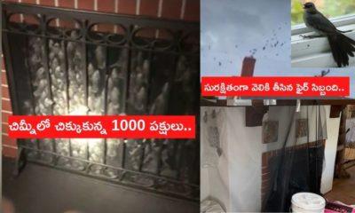 1000 Birds Trapped Inside Chimney
