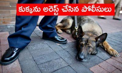 Dog Arrest