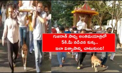 Gujarat Sadhvi's Loyal Dog Walks 5 Km