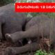 Lightning Kills Herd Of 18 Elephants