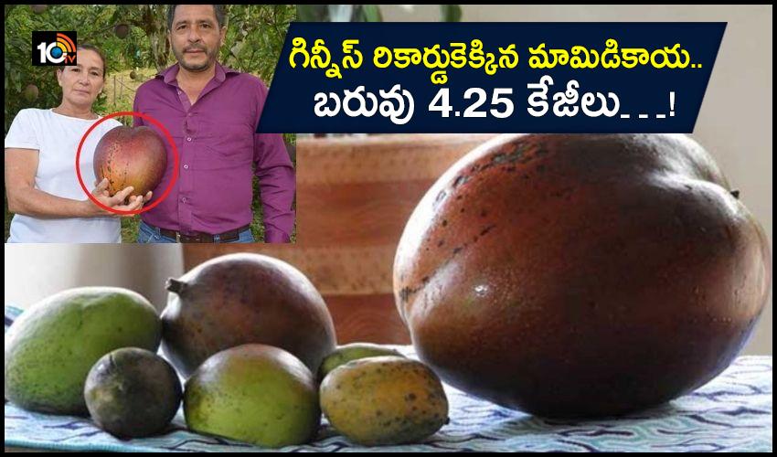Mango Guinness Record