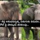Up Elephant Will Be Released On Parole