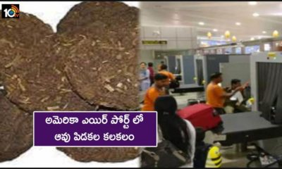 Cow Dung Cakes Found In Baggage Of Indian Passenger At Us Airport Destroyed