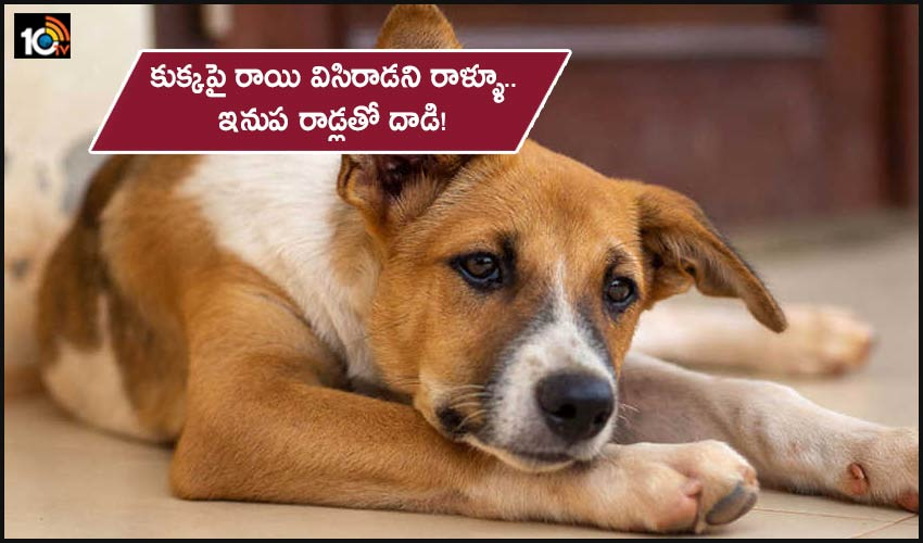 Hyderabad News The Dog Owner Who Attacked The Person Who Threw The Stone At The Dog