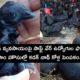 Software Employees Kadaknath Chicken Farming