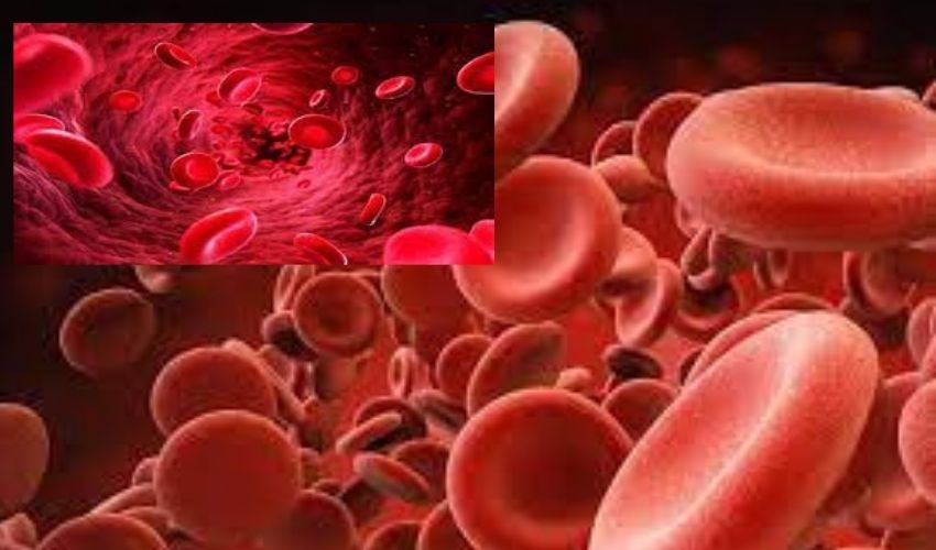 https://10tv.in/latest/if-the-number-of-platelets-is-to-increase-rapidly-these-are-enough-to-eat-259120.html
