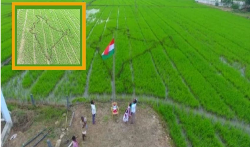 India in crop: జై కిసాన్..పచ్చని పొలంలో భారత్ పటం..జాతీయ జెండా ఆవిష్కరణ