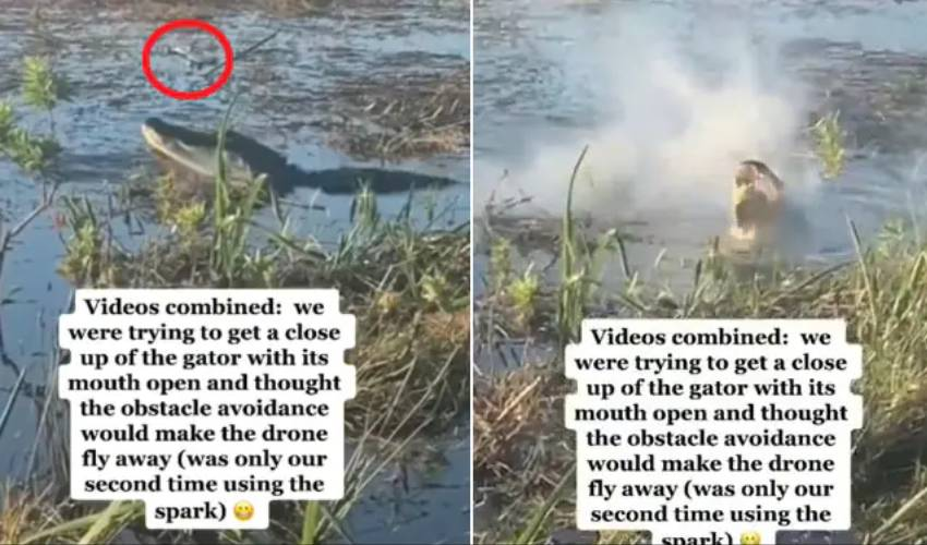Alligator : డ్రోన్ తినేసిన మొసలి.. నోట్లో నుంచి పొగలు.. వీడియో షేర్ చేసిన గూగుల్ సీఈఓ