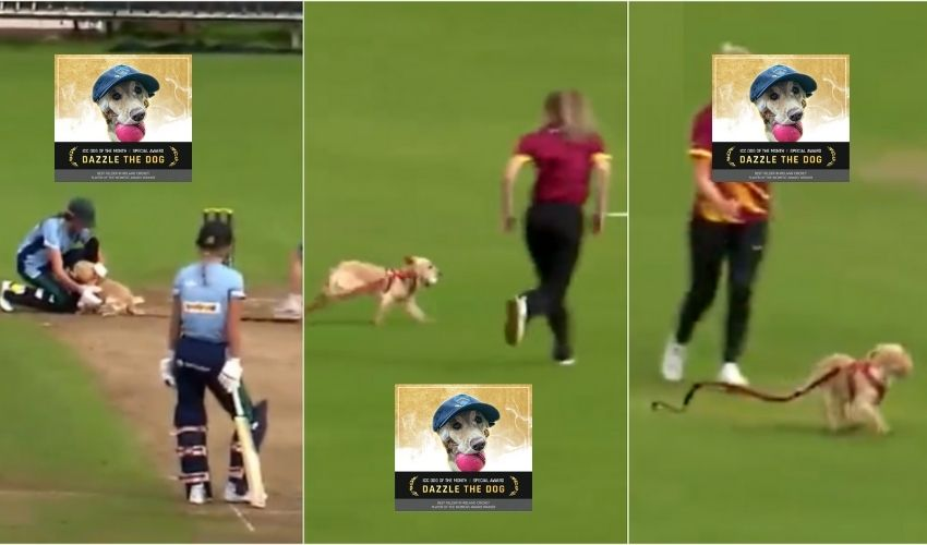 https://10tv.in/sports/icc-player-of-the-month-iccs-special-post-for-viral-dog-275872.html