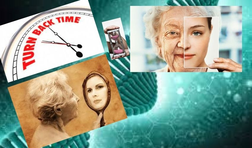 https://10tv.in/international/israel-experiments-on-reverse-aging-biggest-industrialist-investments-276463.html