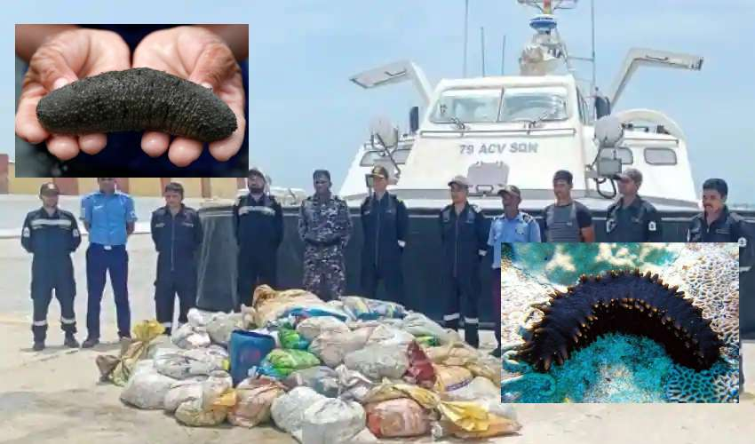 https://10tv.in/national/indian-coast-guard-seizes-2-tons-of-endangered-sea-cucumber-worth-rs-8-crore-278391.html