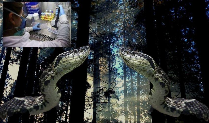 Brazilian : ఆ పాము 'విషం'తో కరోనాను అంతం చేయొచ్చా ?