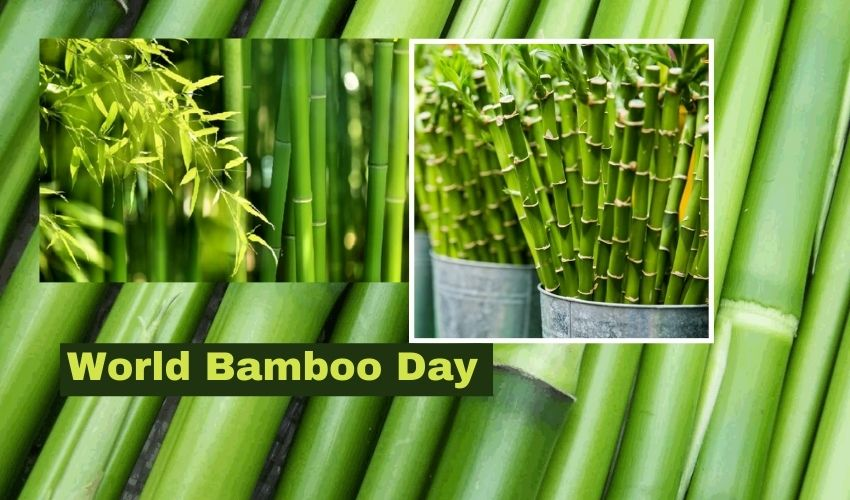 https://10tv.in/national/world-bamboo-day-2021-special-story-277732.html