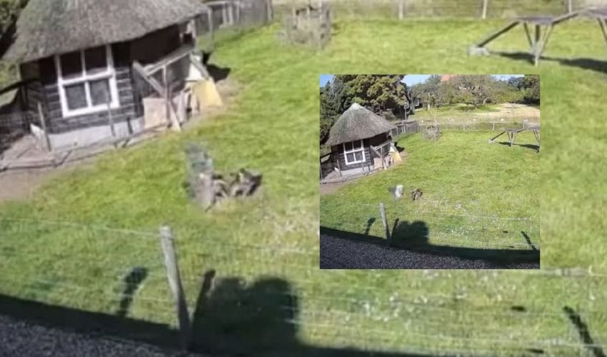 https://10tv.in/international/hawk-attacks-chicken-at-a-farm-in-viral-video-watch-what-happened-next-277433.html