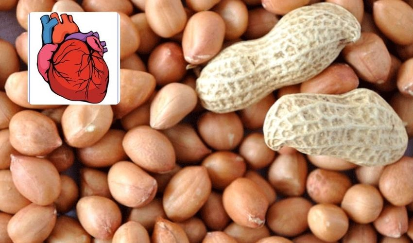 https://10tv.in/life-style/peanuts-protects-heart-plenty-of-nutrients-274629.html