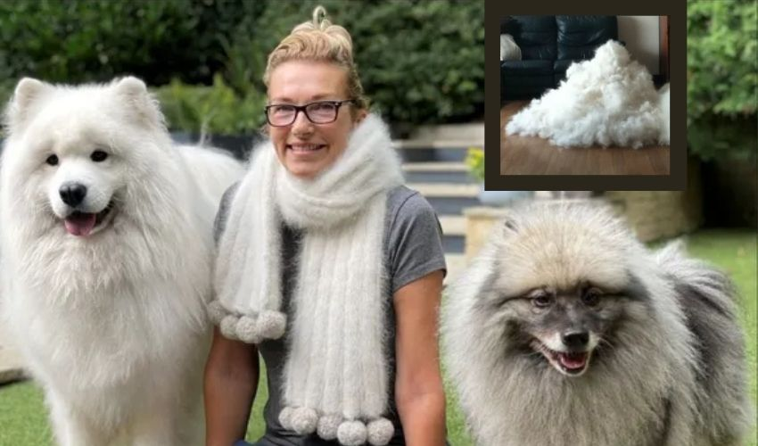 https://10tv.in/international/woman-wearns-scarf-made-from-fur-of-her-pet-dogs-by-spending-rs-18000-277391.html